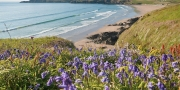 Whitesands Bay in spring with bluebells in foreground Near St David's Pembrokeshire South Coastal Scenery