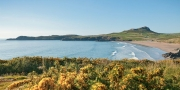 Whitesands Bay in spring with gorse in foreground Near St David's Pembrokeshire South Coastal Scenery